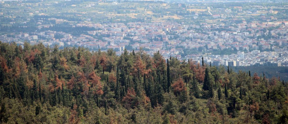 Απαγόρευση κυκλοφορίας σε δασικές περιοχές