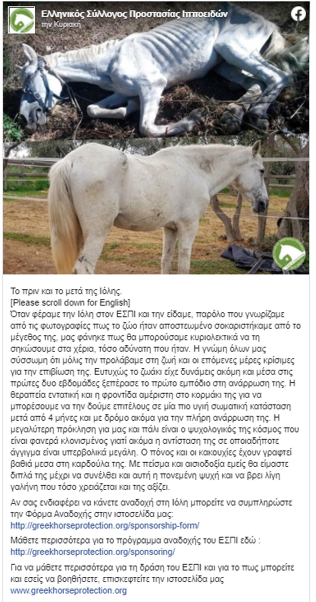 Ιόλη - άλογο