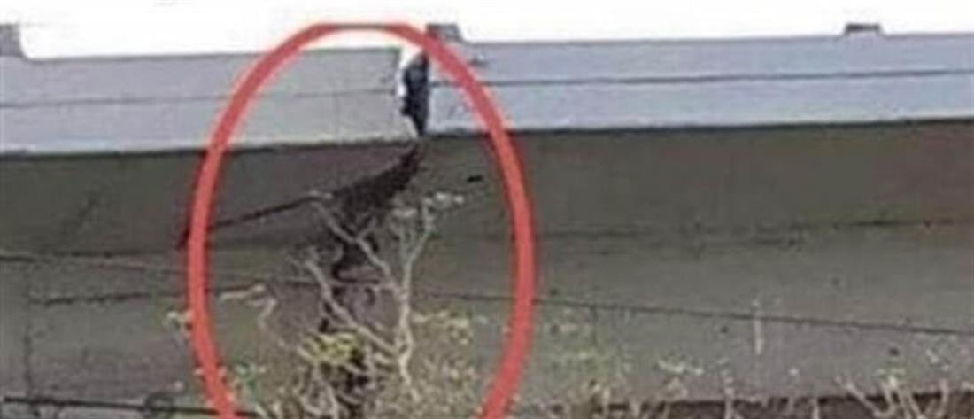 Καταγγελία Τσελέντη για τεράστια ρωγμή στην γέφυρα του Φαληρικού Δέλτα (εικόνες)