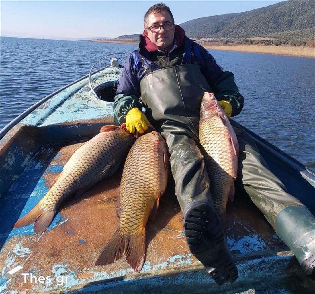 ψάρι γίγας Βόλβη