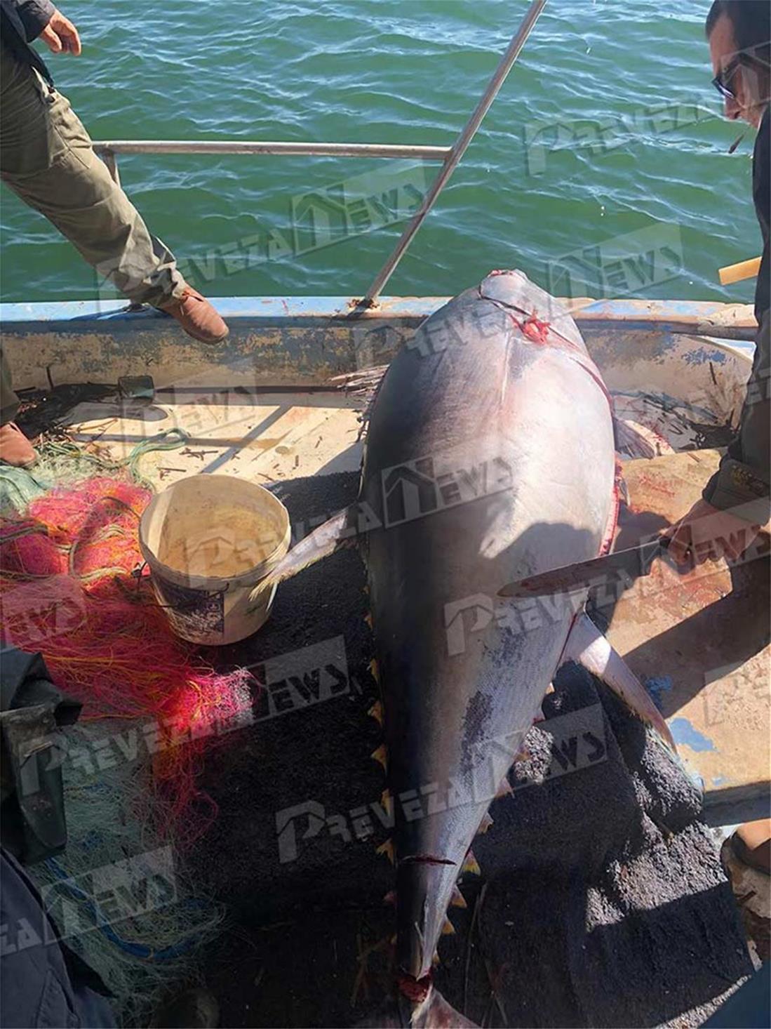 Πρέβεζα - ψαράς - τόνος - 130 κιλά
