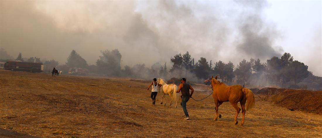 φωτιά - Βαρυμπόμπη - άλογα