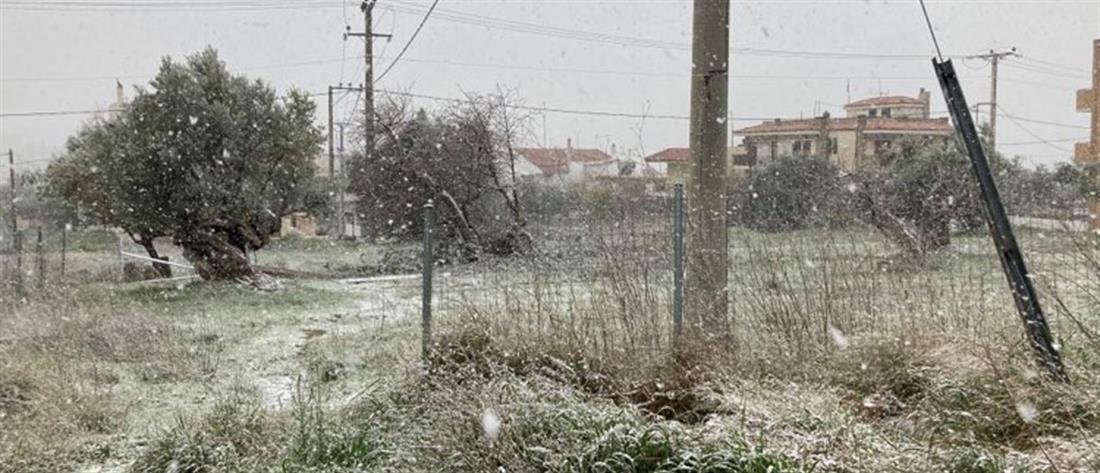 Χιονίζει στην Αθήνα! (εικόνες)