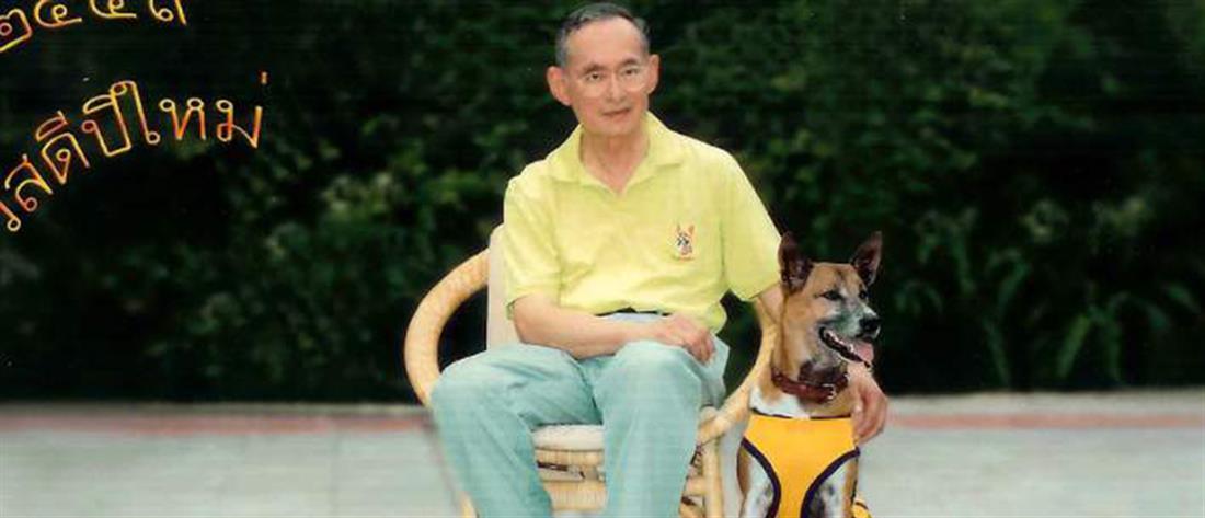 Απειλείται με φυλάκιση 37 ετών για ασέβεια προς τον ...βασιλικό σκύλο!