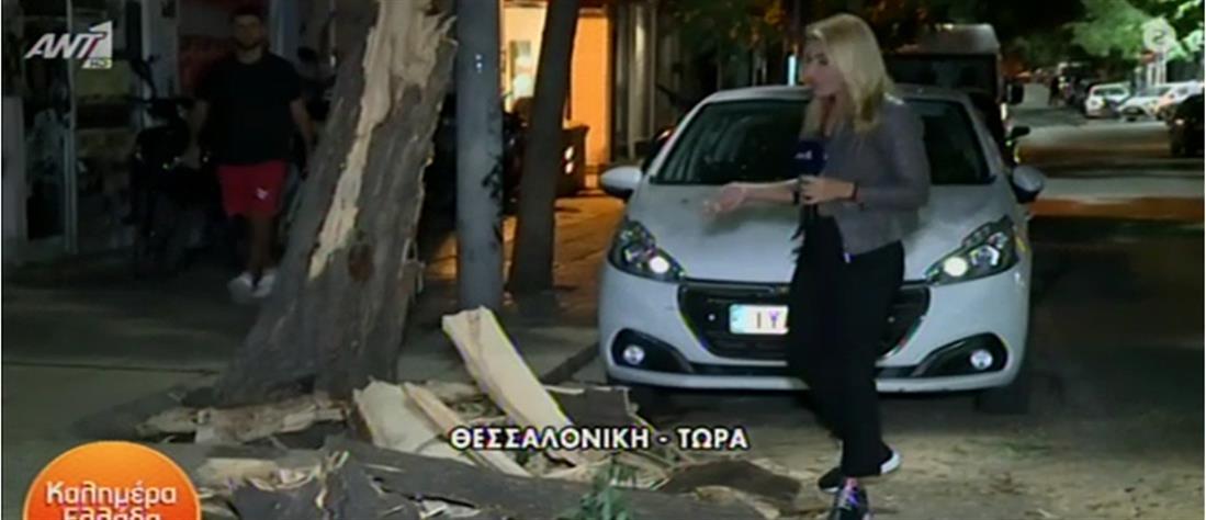 Θεσσαλονίκη: Δέντρο καταπλάκωσε αυτοκίνητο (βίντεο)