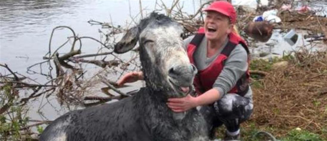 Γελάει ο γάιδαρος; Γελάει… αφού σώθηκε από βέβαιο πνιγμό!