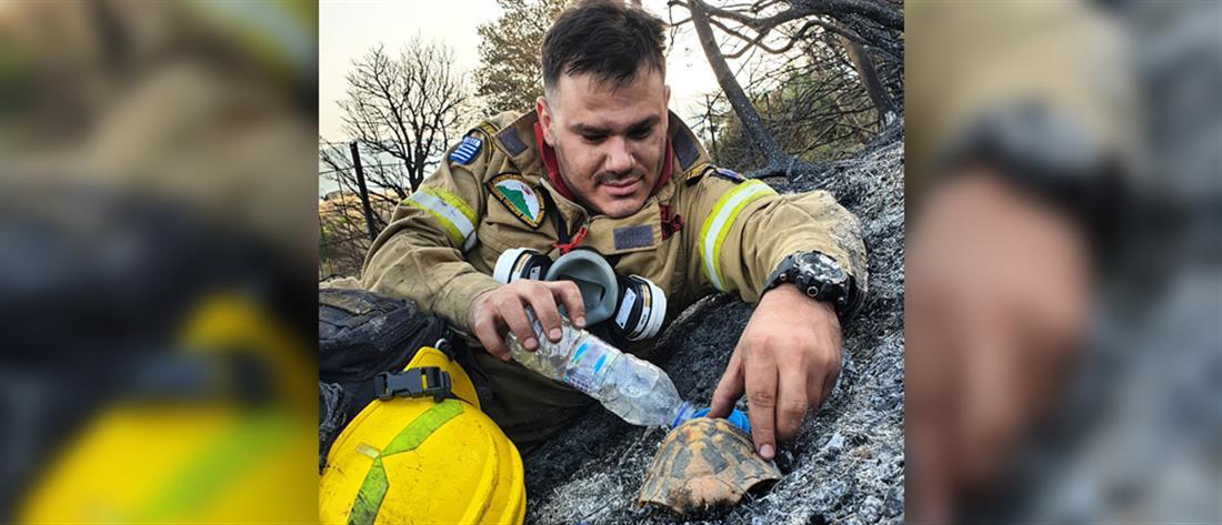 Φωτιά στην Αχαΐα: πυροσβέστης δίνει νερό σε χελώνα (εικόνες)