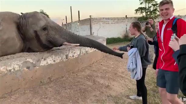 Ελέφαντας... χαστούκισε κορίτσι που επιχείρησε να τον φωτογραφήσει