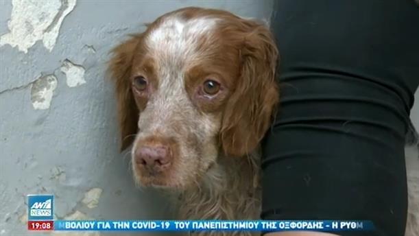 Συγκλονίζει ο σκύλος του ηλικιωμένου που απανθρακώθηκε στην Καλλιθέα