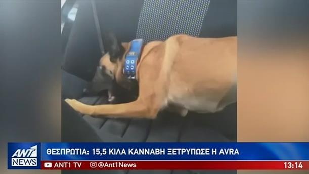 """Αστυνομικός σκύλος """"ξετρύπωσε"""" ναρκωτικά κρυμμένα σε ΙΧ"""