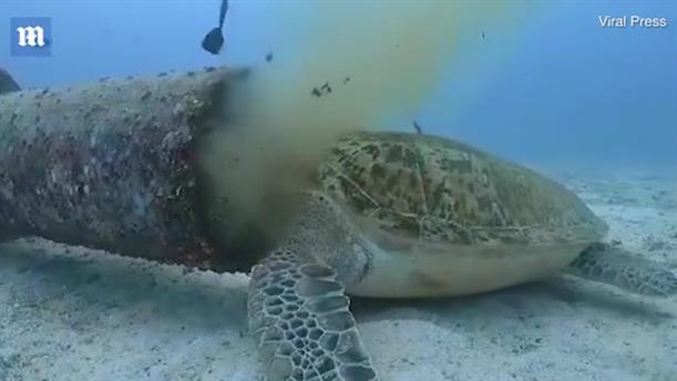 Σοκαριστικό βίντεο δείχνει μία θαλάσσια χελώνα να τρέφεται από απόβλητα υποθαλάσσιου αγωγού
