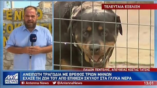 Τραγωδία στα Γλυκά Νερά: σκύλος σκότωσε βρέφος λίγων μηνών