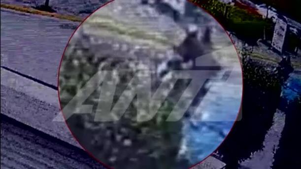 Δολοφονία Καραϊβάζ: βίντεο με τους δράστες