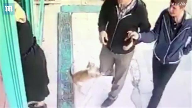 Η γάτα που επιτίθεται σε άνδρες, αλλά όχι γυναίκες και παιδιά