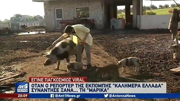 Η «επανασύνδεση» του Λάζου Μαντικού με την… γουρούνα!