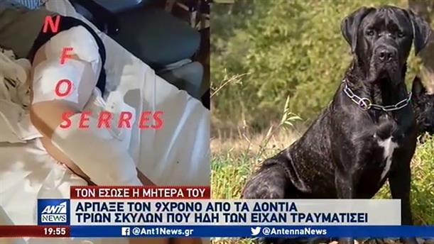Στο νοσοκομείο παραμένει ο 9χρονος στον οποίο επιτέθηκαν σκυλιά