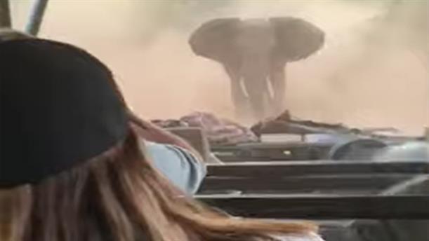 Ελέφαντας πήρε στο κυνήγι αυτοκίνητο τουριστών που έκαναν σαφάρι