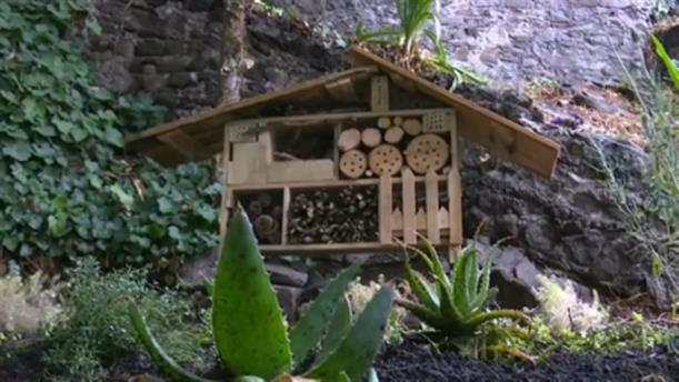 Ξενοδοχείο για... έντομα στο Μεξικό