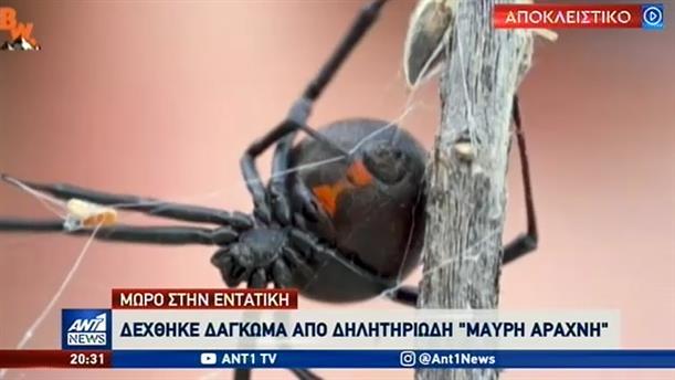 """""""Μαύρη Χήρα"""": Θύμα της επικίνδυνης αράχνης περιγράφει στον ΑΝΤ1 τα συμπτώματα"""