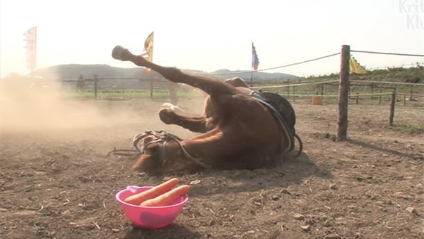"""Το άλογο που το παίζει.. """"ψόφιος κοριός"""" κάθε φορά που προσπαθούν να το ιππεύσουν"""