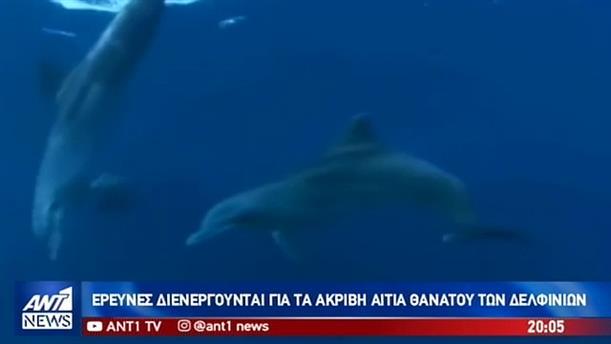 Νεκρά δελφίνια στο Αιγαίο μετά τη «Γαλάζια Πατρίδα»