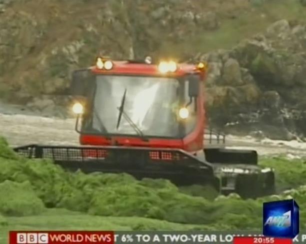 Τοξικά φύκια καταστρέφουν τον τουρισμό