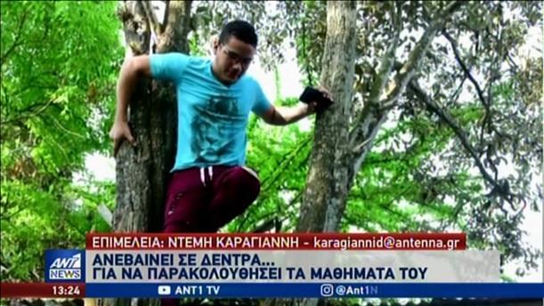 Σκαρφάλωσε σε δέντρο για να παρακολουθεί τις σπουδές του