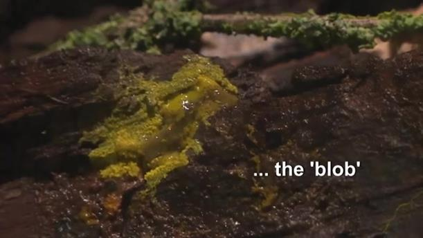 """Blob"": Οργανισμός-μυστήριο στο Ζωολογικό Πάρκο του Παρισιού"