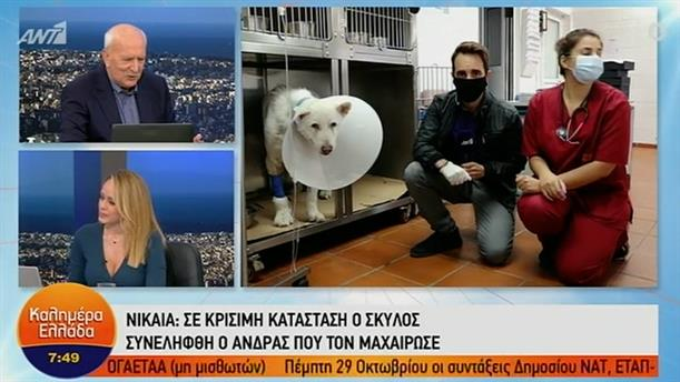 Νίκαια: Σε κρίσιμη κατάσταση ο σκύλος – ΚΑΛΗΜΕΡΑ ΕΛΛΑΔΑ – 15/10/2020