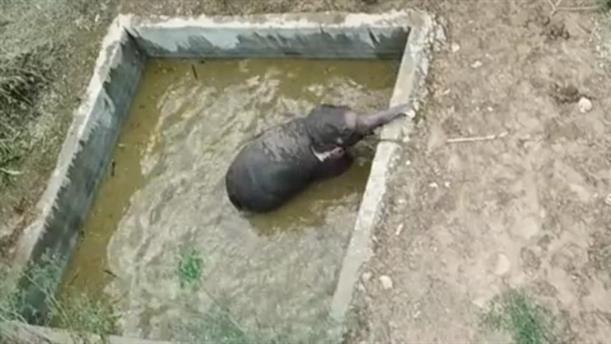 Διάσωση ελέφαντα από 4 μέτρων δεξαμενή