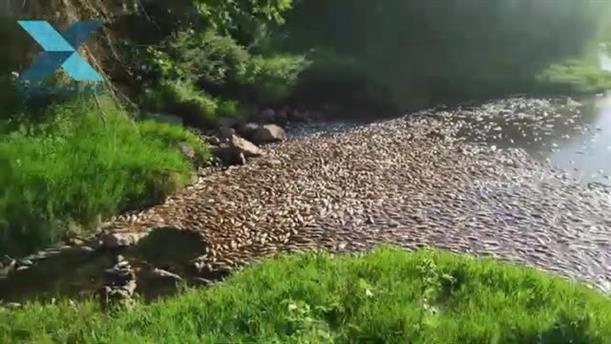 Χιλιάδες νεκρά ψάρια στις λίμνες Βιστωνίδας και Ισμαρίδας