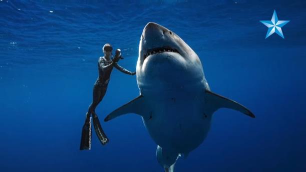 Χαβάη: Δύτες κολύμπησαν δίπλα σε γιγαντιαίο λευκό καρχαρία