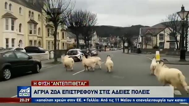 Κορονοϊός: οι άδειοι δρόμοι… προσελκύουν τα άγρια ζώα