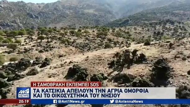 Οι κατσίκες απειλούν το οικοσύστημα στη Σαμοθράκη