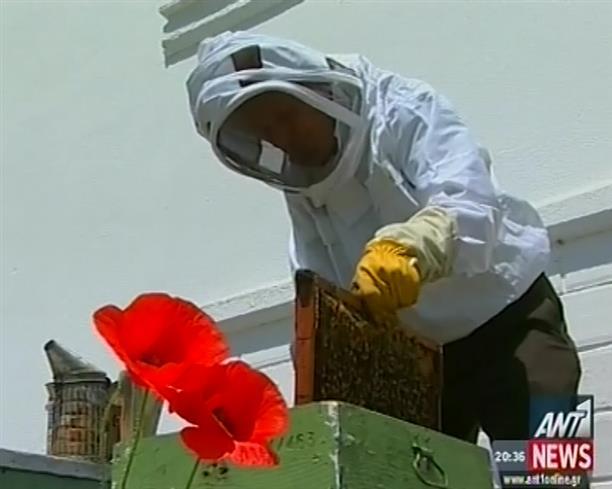 Μειώνεται αισθητά ο πληθυσμός των μελισσών