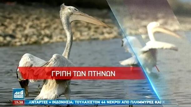 Σε επιφυλακή οι Αρχές για τη γρίπη των πτηνών