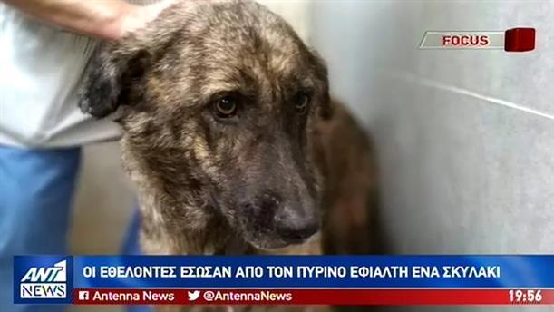 Φωτιά στην Εύβοια: Τραγικός αναμένεται ο απολογισμός για τα άγρια ζώα