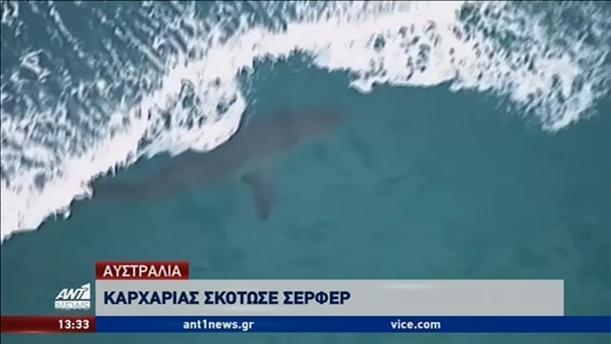 Φονική επίθεση καρχαρία σε σέρφερ