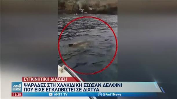 Ψαράδες έσωσαν δελφίνι που πιάστηκε στα δίχτυα τους