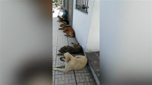 Δηλητηρίασαν σκυλιά άστεγου στο Μεξικό