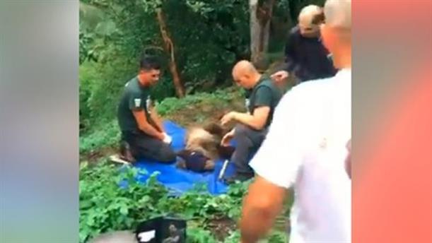 Επιχείρηση διάσωσης για παγιδευμένο αρκουδάκι στα Ιωάννινα