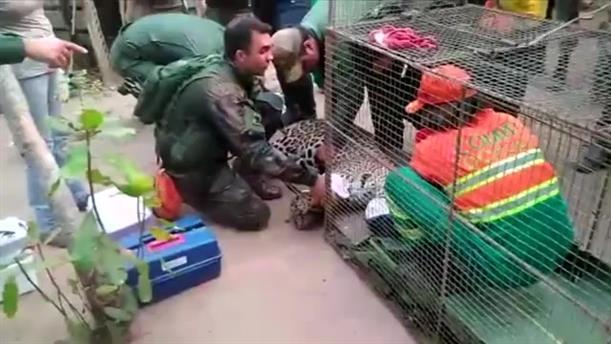 Διάσωση άγριων ζώων από τη φωτιά