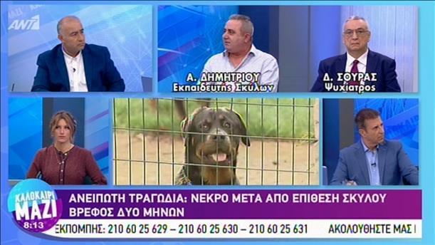 Καλοκαίρι Μαζί: Πότε τα κατοικίδια σκυλιά γίνονται επικίνδυνα