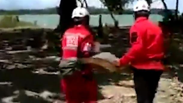 Εθελοντές διέσωσαν δεκάδες θαλάσσιες χελώνες που είχαν ξεβραστεί στη στεριά από το τσουνάμι