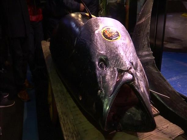 """""""Χαμός"""" στην παραδοσιακή δημοπρασία ψαριών στο Τόκιο για την Πρωτοχρονιά"""