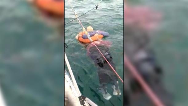 Ψαράδες διέσωσαν αγνοούμενη γυναίκα από τη θάλασσα