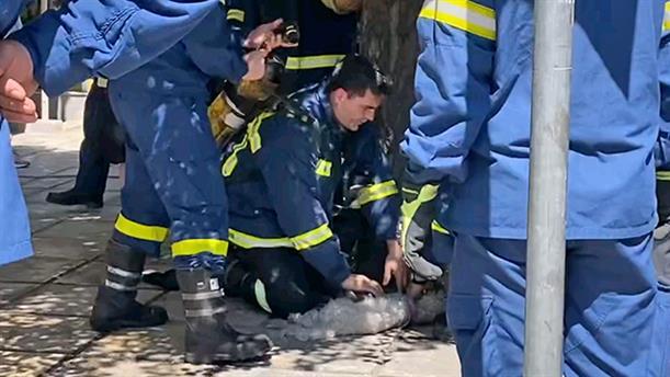 Θεσσαλονίκη: Πυροσβέστης κάνει ΚΑΡΠΑ σε σκύλο