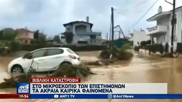 Γέμισαν φίδια και σκουπίδια οι ακτές της Αττικής από την θεομηνία στην Εύβοια