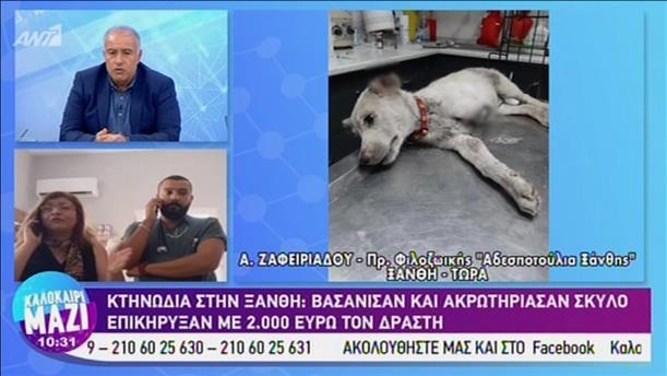 Βασάνισαν και ακρωτηρίασαν σκύλο στην Ξάνθη