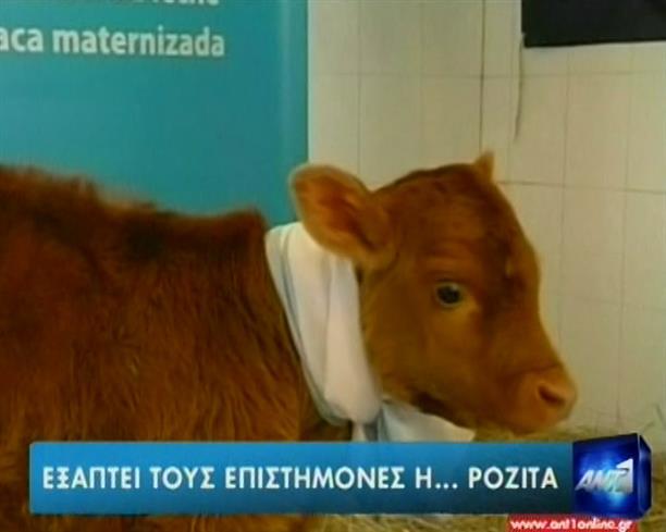 Διχασμός για το αγελαδινό «ανθρώπινο γάλα»